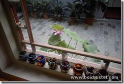 北京胡同四合院青年旅馆-窗台